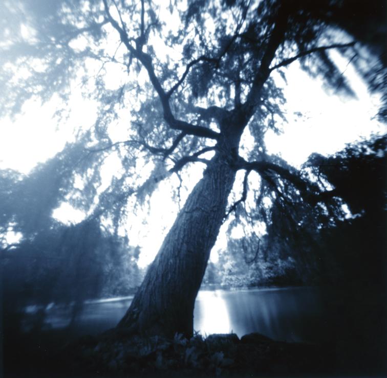Arbor Mannahata