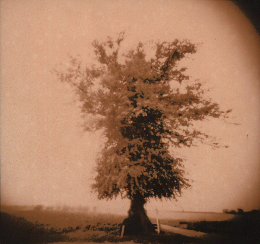 Grens Border Tree Orange