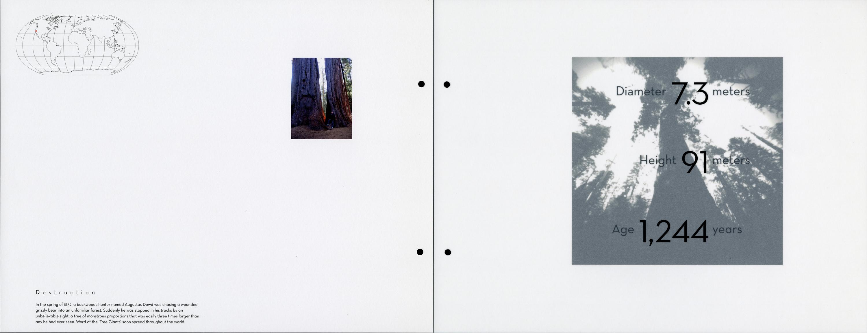 Arbor_californiana_giganteum_spread