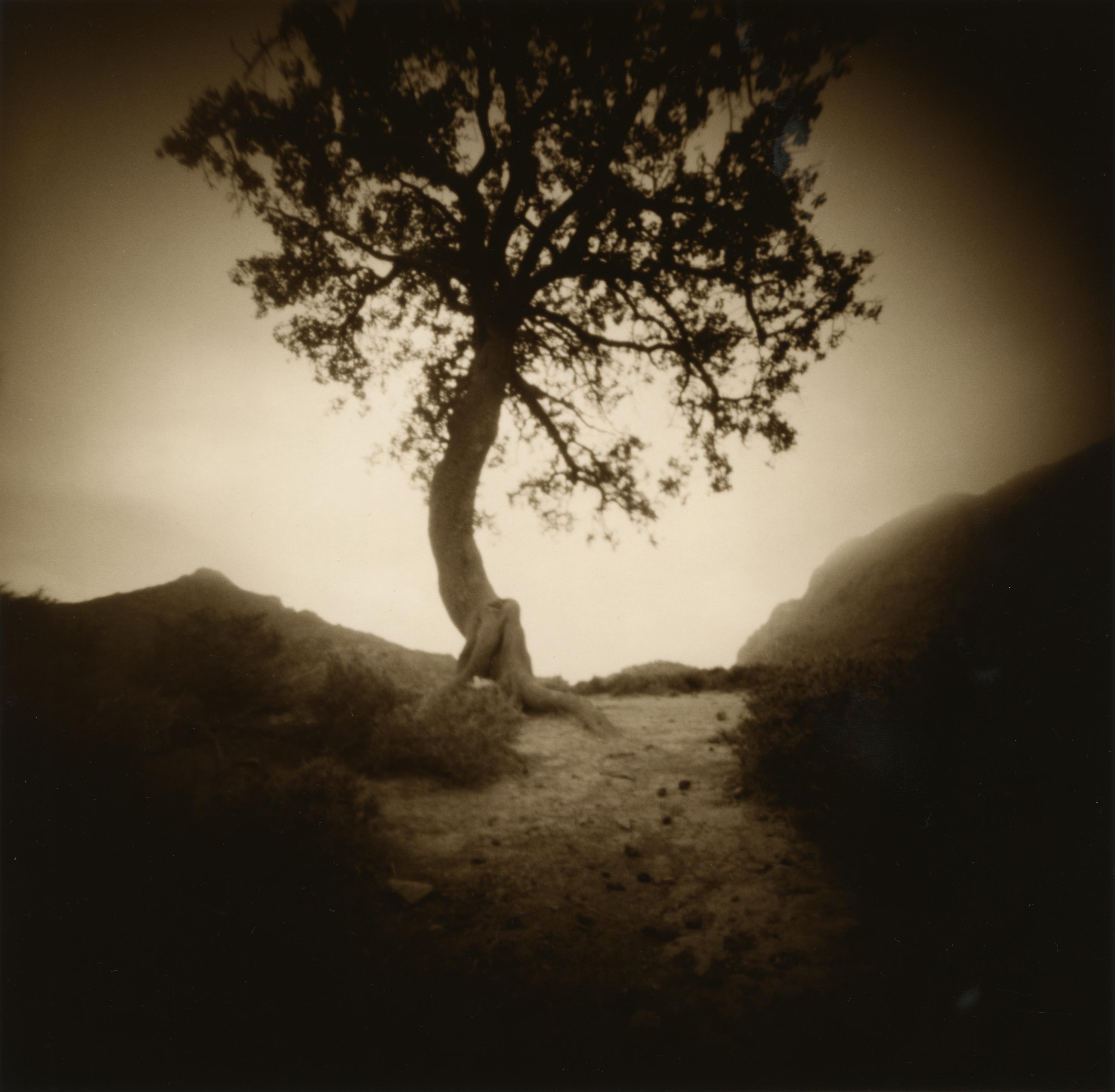 Arbor Creta