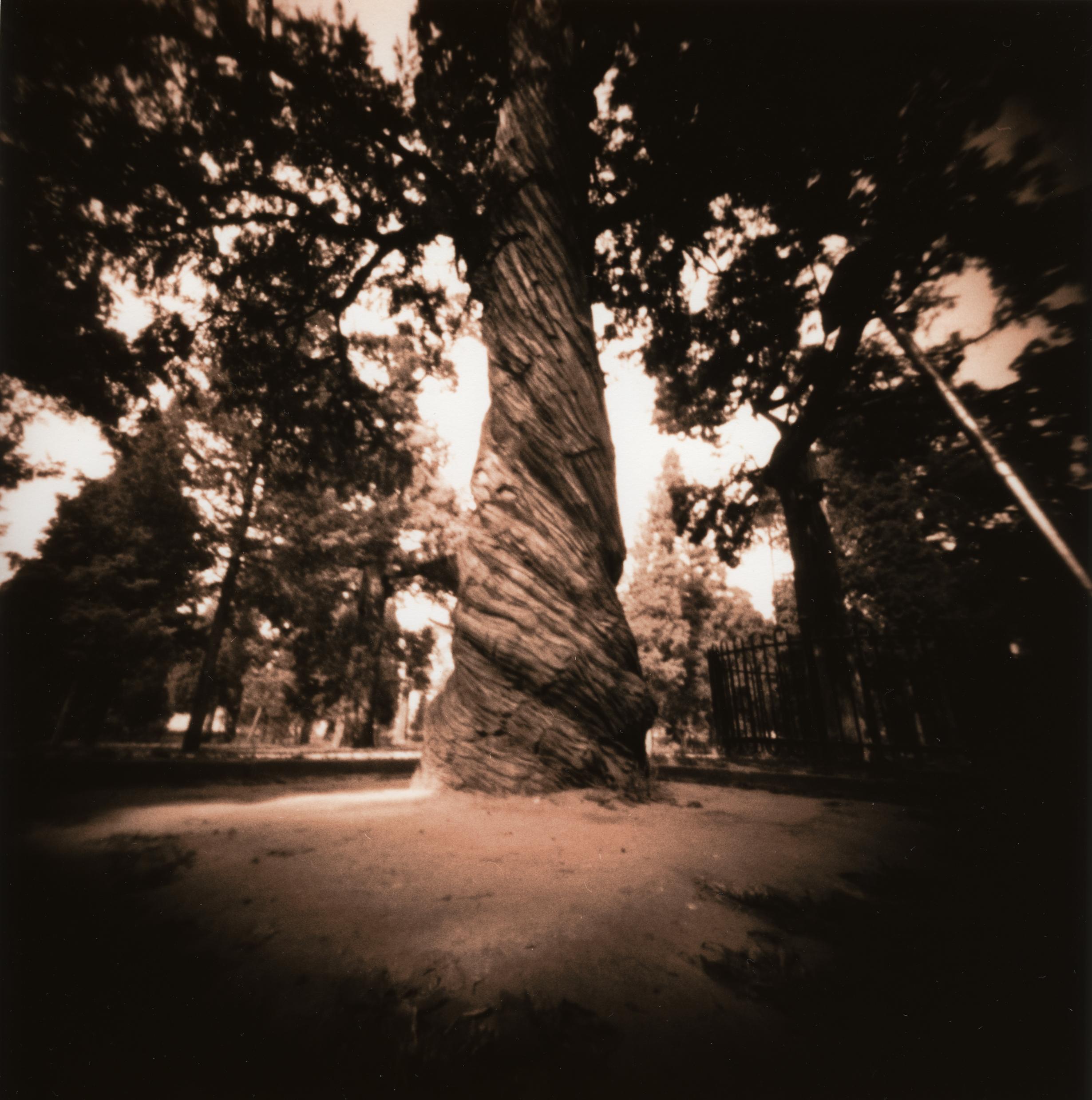 Arbor Chinensis